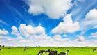 Đấu giá CTXD, MMTB, phương tiện vận tải, đàn bò và đồng cỏ tại Gia Lai