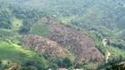 Khu rừng bị chặt hạ nhìn từ xa (Theo baobackan.org.vn)