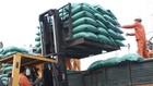 Gạo mua nhập kho dự trữ quốc gia tại miền Bắc được yêu cầu phải xay xát từ thóc vụ Đông Xuân năm 2018 tại Nam Bộ, điều này sẽ phát sinh thêm chi phí vận chuyển. Ảnh: Lê Tiên