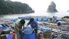 Trong đó, danh mục dịch vụ sự nghiệp công sử dụng NSNN lĩnh vực thủy sản gồm: Điều tra, quy hoạch thuộc lĩnh vực thủy sản... Ảnh: Tường Lâm