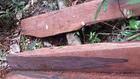 Gỗ quý bị đốn hạ, xẻ phách mang đi, chỉ còn lại các tấm bìa ở vùng lõi vườn quốc gia Phong Nha - Kẻ Bàng.