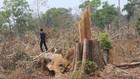 Hiện trường một vụ phá rừng biên giới tại xã Ia O (huyện Ia Grai) gần đây