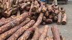 Số gỗ quý bị thu giữ. Ảnh: CTV