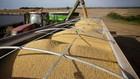 Đậu tương được thu hoạch ở một trang trại thuộc bang North Dakota, Mỹ - Ảnh: Washington Post.