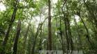 Đề xuất cho phép chuyển đổi mục đích sử dụng 49,5 ha rừng. Ảnh minh họa: TTXVN