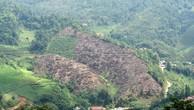 Xử lý nghiêm vụ phá rừng ở Bắc Kạn