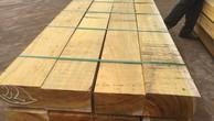 Đấu giá lô gỗ sao tại Ninh Thuận