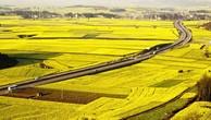 TP.HCM được chuyển đổi 26.000 ha đất nông nghiệp
