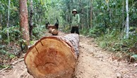 Liên tiếp nhiều vụ phá rừng diễn ra tại huyện Chư Păh