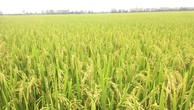 Thủ tướng Chính phủ đồng ý chuyển mục đích sử dụng đất tại Vĩnh Phúc