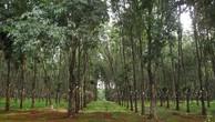 Đến 2020, tỉnh Đắk Lắk có 296.516 ha đất rừng sản xuất