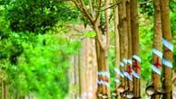 Ngày 7/9/2018, đấu giá cây cao su tại Bình Phước