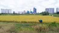 Người dân ở Thanh Đa, Bình Thạnh thu hoạch lúa trên đất nông nghiệp