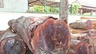 Số gỗ lậu bị lực lượng chức năng bắt giữ