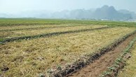 Ngày 02/11/2018, đấu giá quyền sử dụng đất tại huyện Lý Nhân, tỉnh Hà Nam