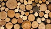 Ngày 29/11/2018, đấu giá 16,391 m3 gỗ tròn, 67,494 m3 gỗ xẻ hộp và 02 máy cưa xăng tại tỉnh Khánh Hòa