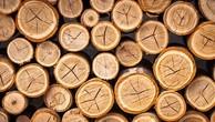 Ngày 26/11/2018, đấu giá lô 70,034 m3 gỗ các loại từ nhóm IIA đến nhóm VIII tại Đắk Lắk