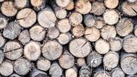 Ngày 16/11/2018, đấu giá 10,945 m3 gỗ xẻ hộp, tròn các loại tại tỉnh Khánh Hòa