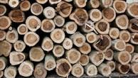 Ngày 28/12/2018, đấu giá 7,903 m3 gỗ xẻ hộp, gỗ tròn các loại tại tỉnh Khánh Hòa