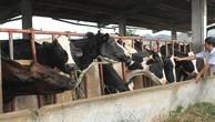 Làn sóng FDI mới sẽ tạo áp lực lớn lên ngành chăn nuôi trong nước