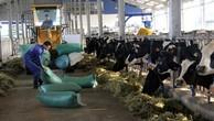 GTNFoods chi 1.330 tỷ đồng thâu tóm 65% cổ phần Sữa Mộc Châu