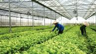Địa phương cần tham gia chặt chẽ hơn, hỗ trợ người nông dân cam kết phát triển bền vững cùng doanh nghiệp. Ảnh: Nhã Chi