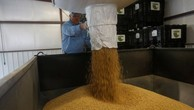 Năm 2017, đậu tương là mặt hàng nông sản xuất khẩu lớn nhất của Mỹ sang Trung Quốc - nước chiếm khoảng 60% thương mại đậu tương toàn cầu - Ảnh: Reuters/BBC.
