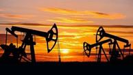 Giá dầu lao dốc xuống đáy 14 tháng