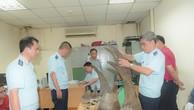 Bắt lô hàng gần 34 kg sừng tê giác tại sân bay Nội Bài