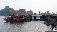 Liên danh Sa Vĩ – Xây dựng và Phát triển hạ tầng Quảng Ninh trúng gói thầu 42 tỷ thi công khu neo đậu tránh bão
