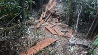 Đắk Nông: Điều tra vụ phá rừng với quy mô lớn ngay trong dịp Tết Nguyên đán
