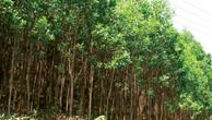 Ngày 28/03/2019, đấu giá gỗ rừng trồng keo lai tại tỉnh Thừa Thiên Huế