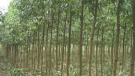 Ngày 1/4/2019, đấu giá gỗ rừng trồng tại tỉnh Thừa Thiên Huế
