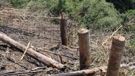 Phó chủ tịch xã phá 2,4 ha rừng