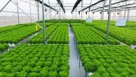Gia Lai: Sơ tuyển nhà đầu tư dự án nông nghiệp công nghệ cao