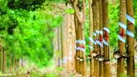 Tập đoàn Cao su ước tính giá đền bù mỗi hecta đất trong vùng dự án là 600 triệu đồng.