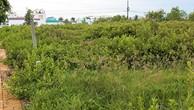 Khu dân cư Nọc Nạng không được đầu tư xây dựng cơ sở hạ tầng, cây cỏ mọc um tùm nhưng đã phân lô bán nền. Ảnh Internet