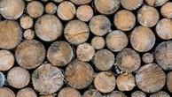 Ngày 9/7/2019, đấu giá 27,574m3 gỗ tròn, xẻ tại tỉnh Kon Tum
