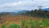 Yếu kém trong quản lý đất đai tại các nông, lâm trường quốc doanh