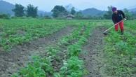 Xuất hiện 22.000 mô hình sản xuất nông lâm nghiệp tiên tiến, hiệu quả