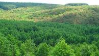 Phát hiện nhiều sai phạm trong giao đất, giao rừng tại Bình Phước