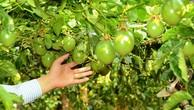 Hoàng Anh Gia Lai: Doanh thu từ trái cây chưa như kỳ vọng
