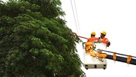 Đội đường dây đang cưa cây để không ảnh hưởng tới hành lang an toàn lưới điện