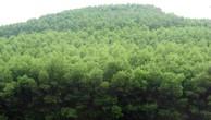 Đấu giá Rừng trồng tại Thị xã Hương Trà, Tỉnh Thừa Thiên Huế.