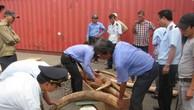 Sừng tê giác luôn là mặt hàng nóng trong công tác chống buôn lậu