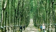 Tập đoàn Cao su Việt Nam dự kiến IPO vào tháng 7