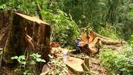 Thanh tra việc chuyển mục đích sử dụng rừng phòng hộ tại Phú Yên