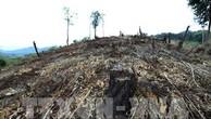 Phá rừng, khai thác lâm sản trái phép ở Tây Nguyên vẫn chưa giảm. Ảnh: TTXVN