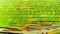 Thúc đẩy tích tụ đất đai, tạo điều kiện tái cơ cấu nông nghiệp