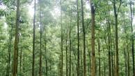 Đấu giá rừng trồng tại Thị xã Hương Trà, Thừa Thiên Huế